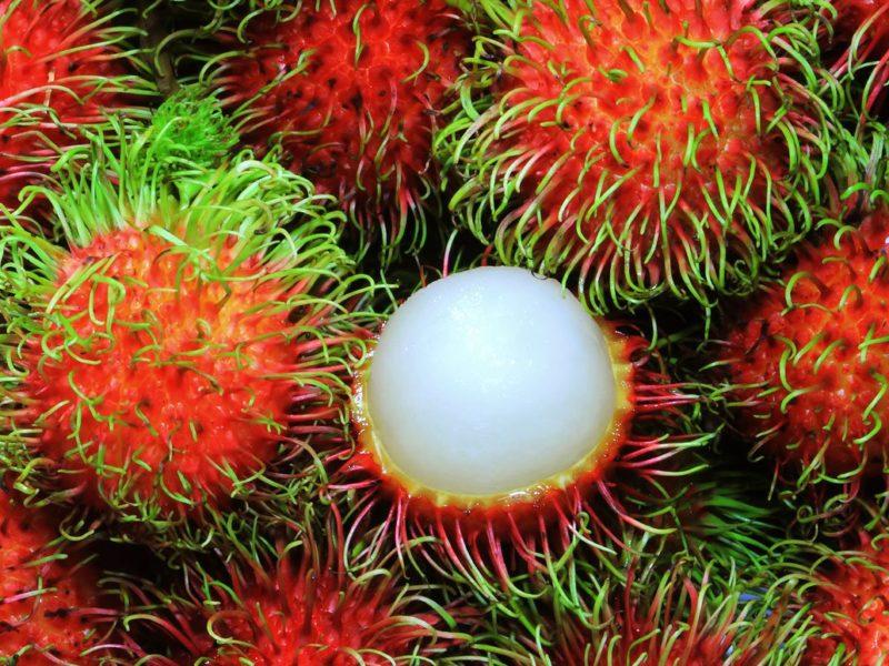 Top 10 – Najexotickejšie plody ovocia