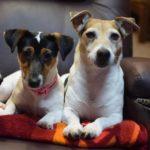 Život psíkov v útulku